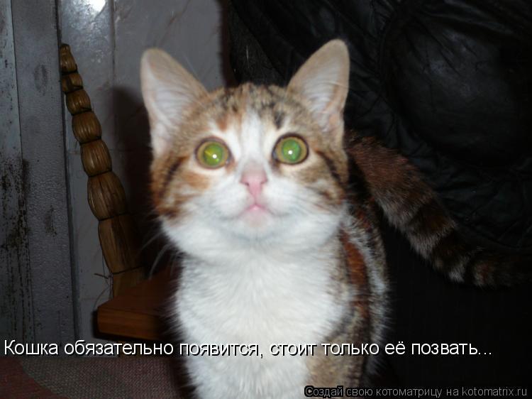 Котоматрица: Кошка обязательно появится, стоит только её позвать...  Кошка обязательно появится, стоит только её позвать...