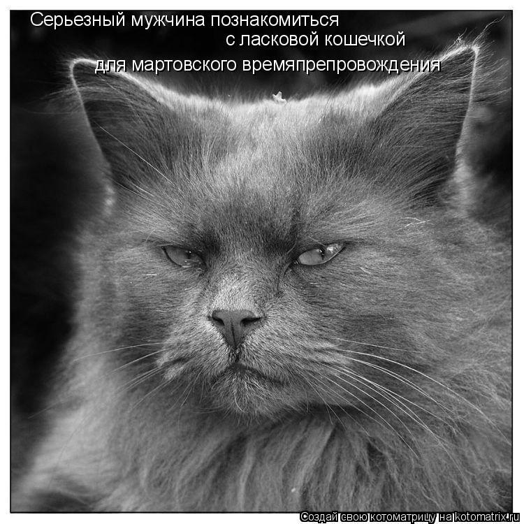 Котоматрица: Серьезный мужчина познакомиться  с ласковой кошечкой для мартовского времяпрепровождения