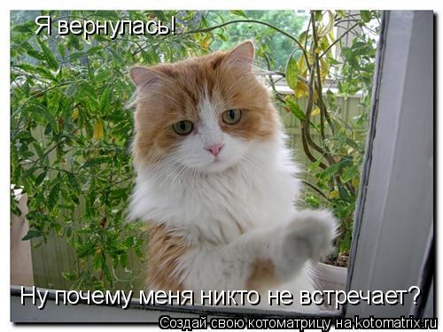 Котоматрица: Я вернулась! Ну почему меня никто не встречает?