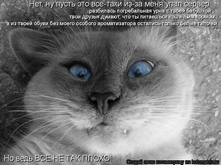 Котоматрица: Нет, ну пусть это все-таки из-за меня упал сервер разбилась погребальная урна с твоей бабушкой твои друзья думают, что ты питаешься кошачьим