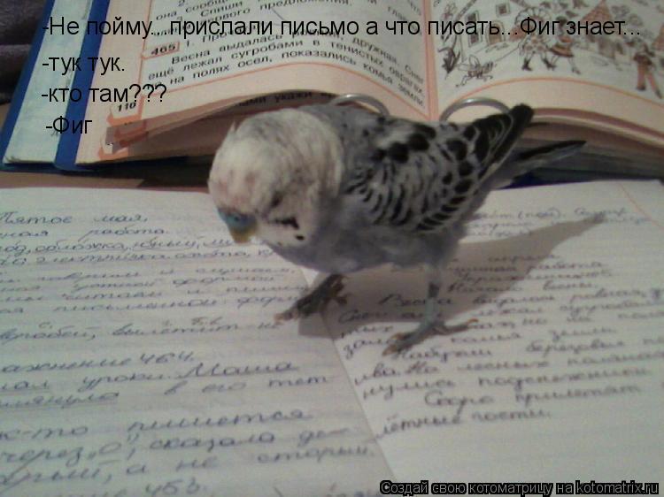 Котоматрица: -Не пойму...прислали письмо а что писать...Фиг знает... -тук тук. -тук тук. -кто там??? -Фиг