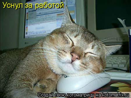 Котоматрица: Уснул за работой
