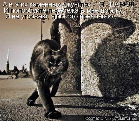 Котоматрица: А в этих каменных джунглях -  Я - ЦАРЬ!!!  И попробуйте перебежать мне дорогу...  Я не угрожаю, я просто предлагаю...
