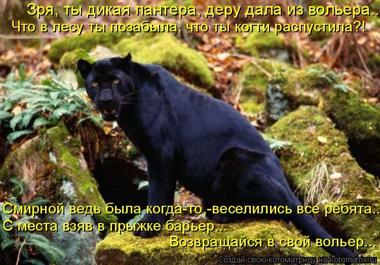 Котоматрица: Зря, ты дикая пантера, деру дала из вольера.. Что в лесу ты позабыла, что ты когти распустила?! Смирной ведь была когда-то,-веселились все ребя