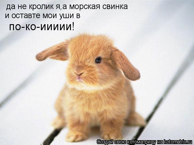 Котоматрица: да не кролик я,а морская свинка и оставте мои уши в   по-ко-иииии!