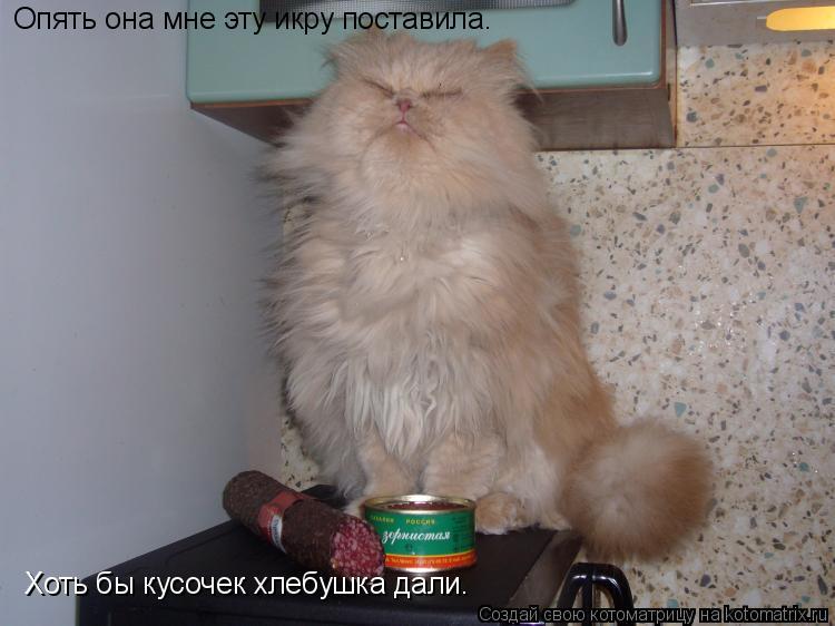 Котоматрица: Опять она мне эту икру поставила. Хоть бы кусочек хлебушка дали.