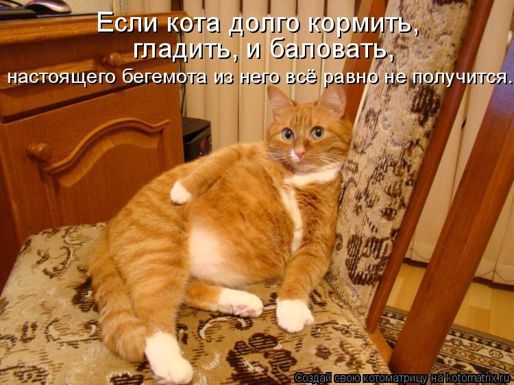 Котоматрица: Если кота долго кормить,  гладить, и баловать,  настоящего бегемота из него всё равно не получится.
