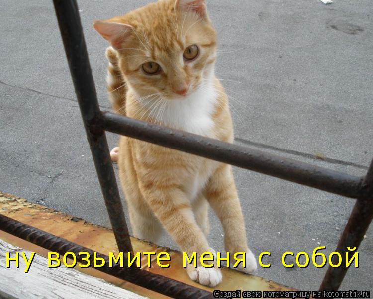 Котоматрица: ну возьмите меня с собой