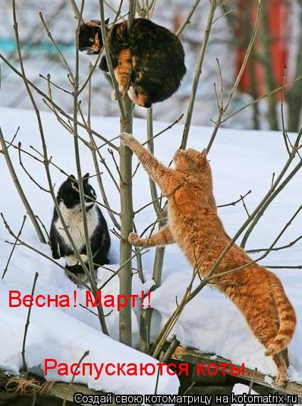 Котоматрица: Весна! Март!! Распускаются коты..