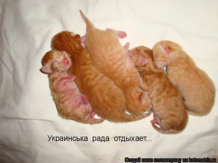 Котоматрица: Украинська  рада  отдыхает...