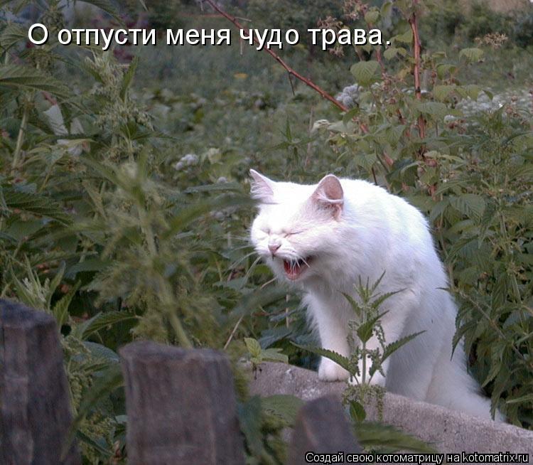 Котоматрица: О отпусти меня чудо трава.