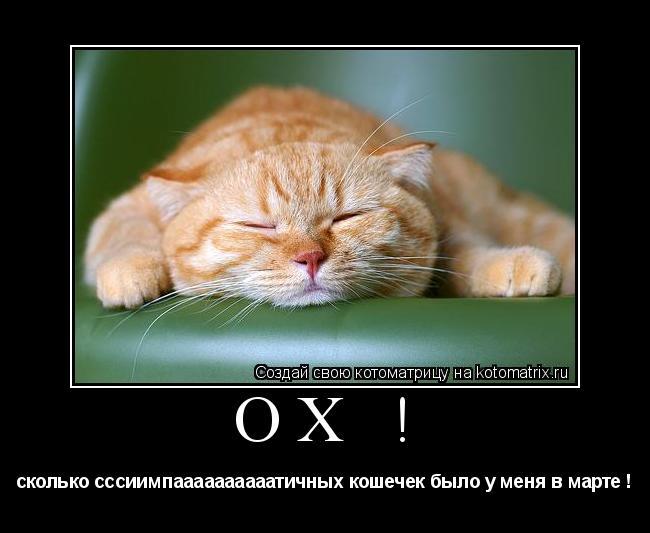 Котоматрица: Ох ! сколько сссиимпаааааааааатичных кошечек было у меня в марте !