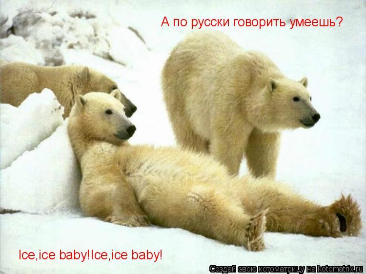 Котоматрица: Ice,ice baby!Ice,ice baby! А по русски говорить умеешь?
