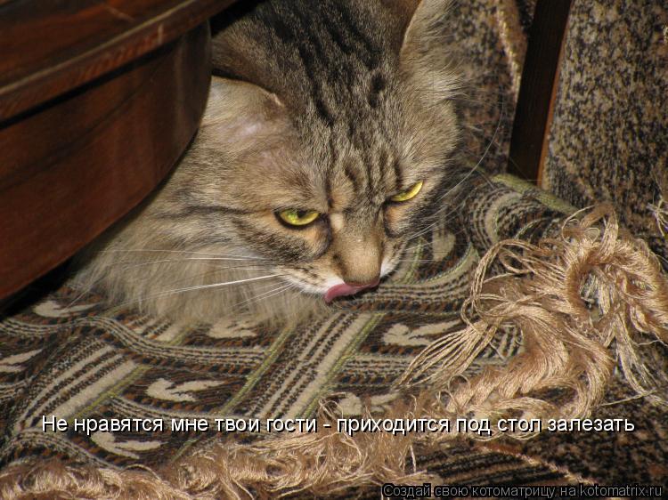 Котоматрица: Не нравятся мне твои гости - приходится под стол залезать
