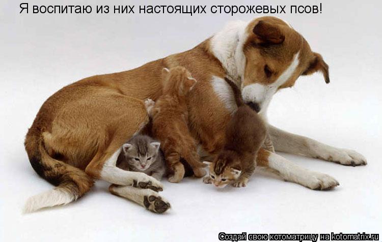 Котоматрица: Я воспитаю из них настоящих сторожевых псов!