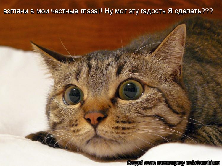 Котоматрица: взгляни в мои честные глаза!! Ну мог эту гадость Я сделать???