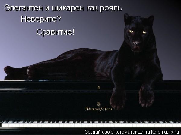 Котоматрица: Элегантен и шикарен как рояль Неверите? Сравнтие!