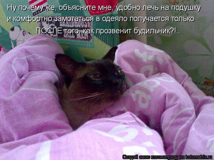 Котоматрица: Ну почему же, объясните мне, удобно лечь на подушку  и комфортно замотаться в одеяло получается только ПОСЛЕ того, как прозвенит будильник?!.