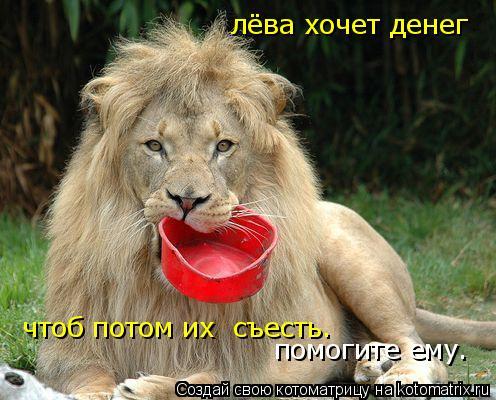Котоматрица: лёва хочет денег чтоб потом их  съесть. помогите ему.