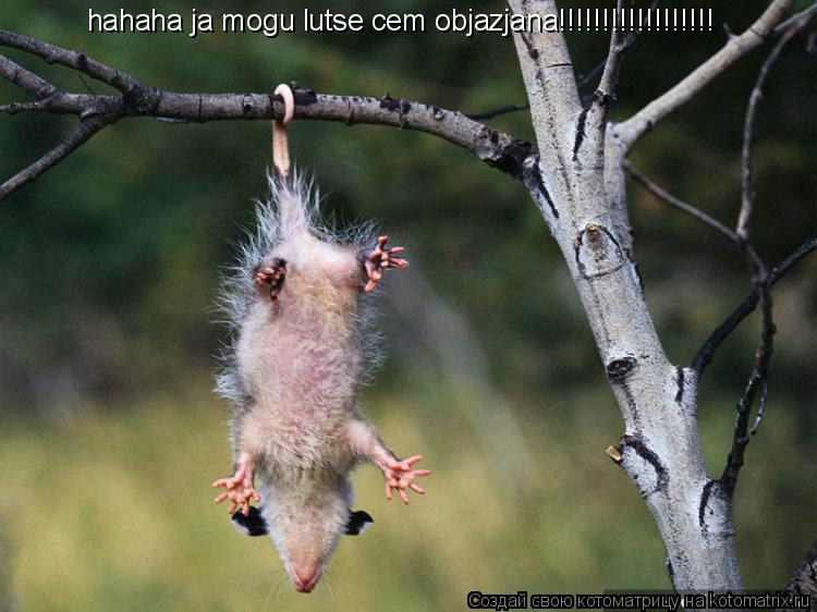 Котоматрица: hahaha ja mogu lutse cem objazjana!!!!!!!!!!!!!!!!!!