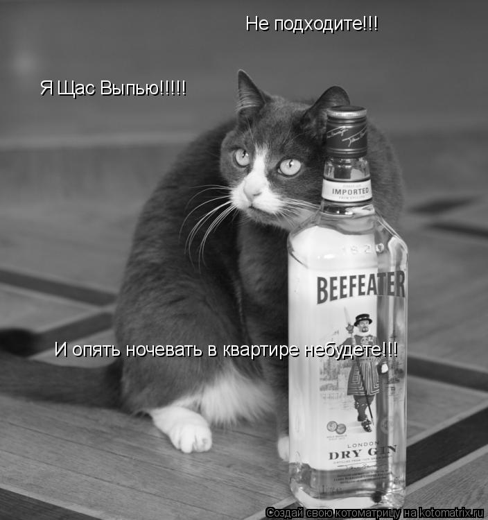 Котоматрица: Не подходите!!! Я Щас Выпью!!!!! И опять ночевать в квартире небудете!!!