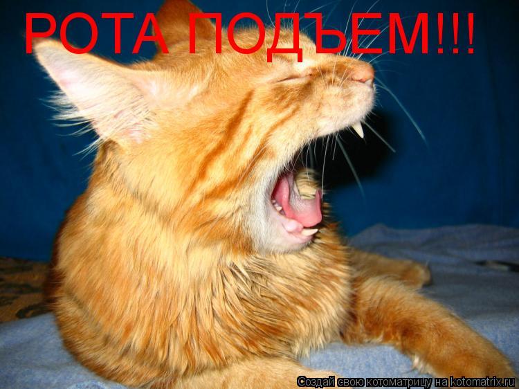 Котоматрица: РОТА ПОДЪЕМ!!!