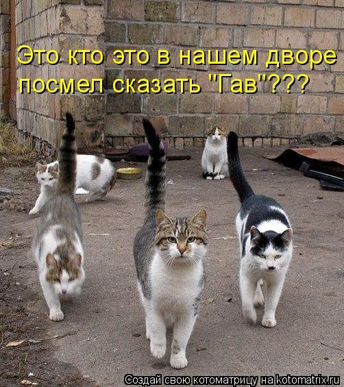 """Котоматрица: Это кто это в нашем дворе  посмел сказать """"Гав""""???"""