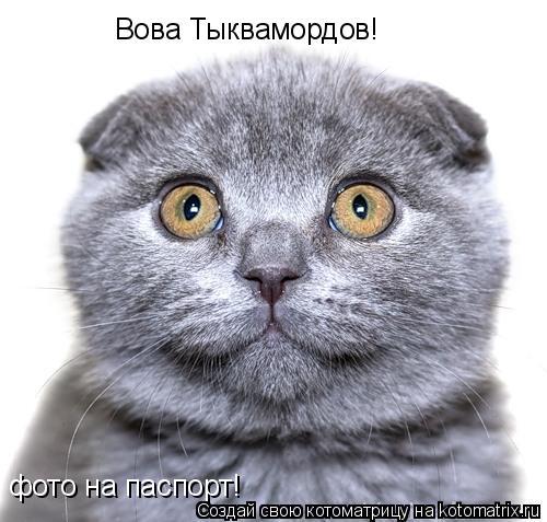 Котоматрица: фото на паспорт! Вова Тыквамордов!