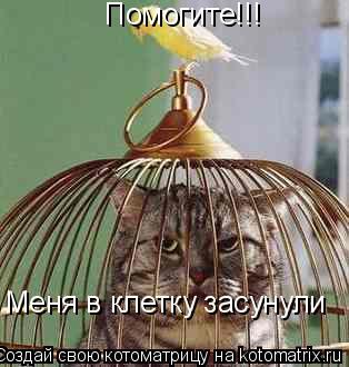 Котоматрица: Помогите!!! Меня в клетку засунули