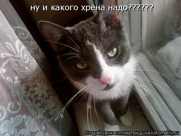 Котоматрица: ну и какого хрена надо??????