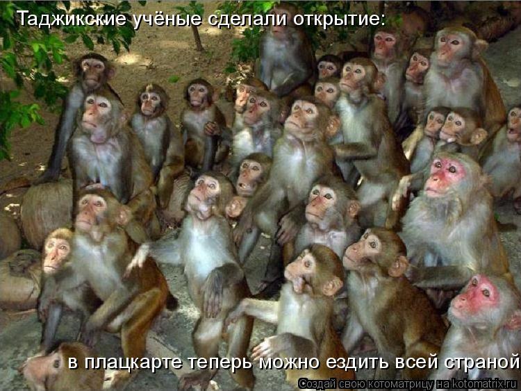 Котоматрица: Таджикские учёные сделали открытие: в плацкарте теперь можно ездить всей страной