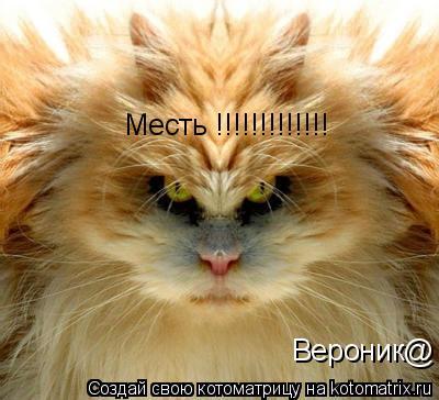 Котоматрица: Месть !!!!!!!!!!!!! Вероник@