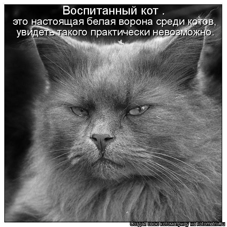 Котоматрица: Воспитанный кот –  это настоящая белая ворона среди котов,  увидеть такого практически невозможно.