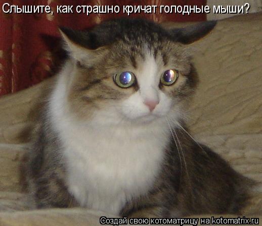 Котоматрица: Слышите, как страшно кричат голодные мыши?