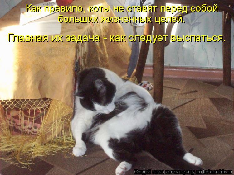 Котоматрица: Как правило, коты не ставят перед собой  больших жизненных целей.  Главная их задача - как следует выспаться.