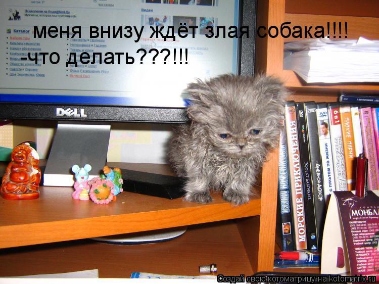 Котоматрица: меня внизу ждёт злая собака!!!! -что делать???!!!