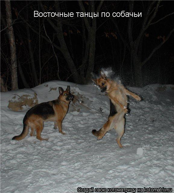 Котоматрица: Восточные танцы по собачьи
