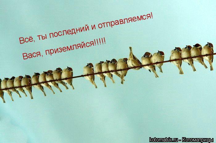 Котоматрица: Всё, ты последний и отправляемся! Всё, ты последний и отправляемся! Вася, приземляйся!!!!!