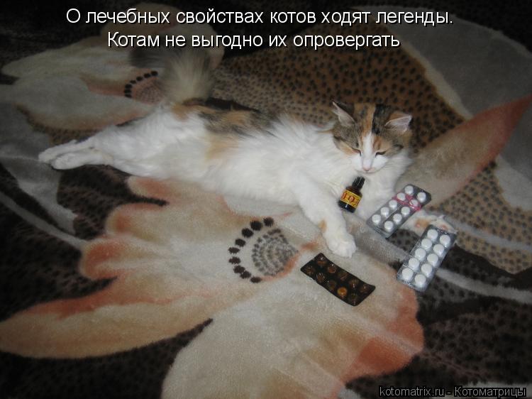 Котоматрица: О лечебных свойствах котов ходят легенды.  Котам не выгодно их опровергать