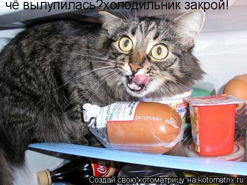 Котоматрица: чё вылупилась?холодильник закрой!