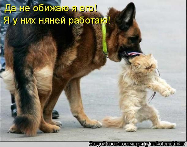 Котоматрица: Да не обижаю я его!  Я у них няней работаю!