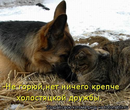 Котоматрица: -Не горюй,нет ничего крепче холостяцкой дружбы.