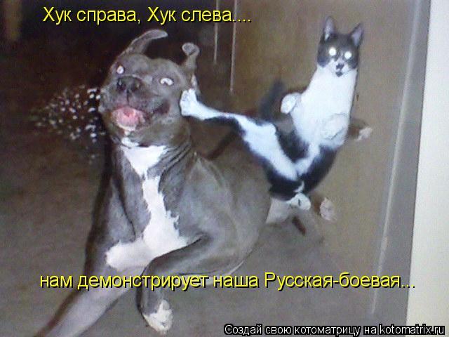 Котоматрица: Хук справа, Хук слева.... нам демонстрирует наша Русская-боевая...