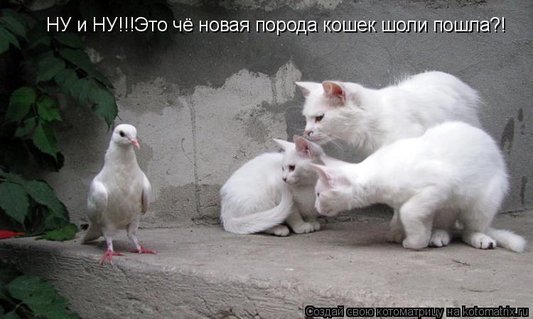 Котоматрица: НУ и НУ!!!Это чё новая порода кошек шоли пошла?!