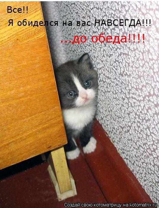 Котоматрица: Все!!  Я обиделся на вас НАВСЕГДА!!! ...до обеда!!!!