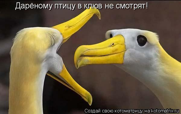 Котоматрица: Дарёному птицу в клюв не смотрят!