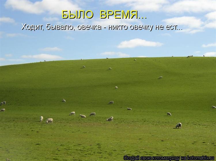 Котоматрица: Ходит, бывало, овечка - никто овечку не ест... БЫЛО  ВРЕМЯ...
