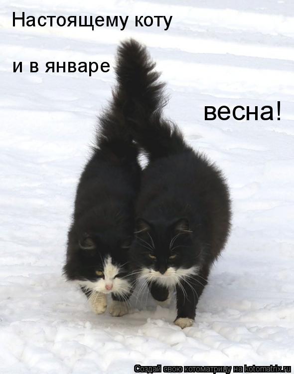 Котоматрица: Настоящему коту и в январе весна!