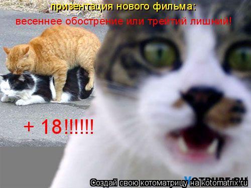 Котоматрица: весеннее обострение или трейтий лишний! призентация нового фильма: призентация нового фильма: + 18!!!!!!