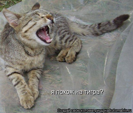 Котоматрица: я похож на тигра?